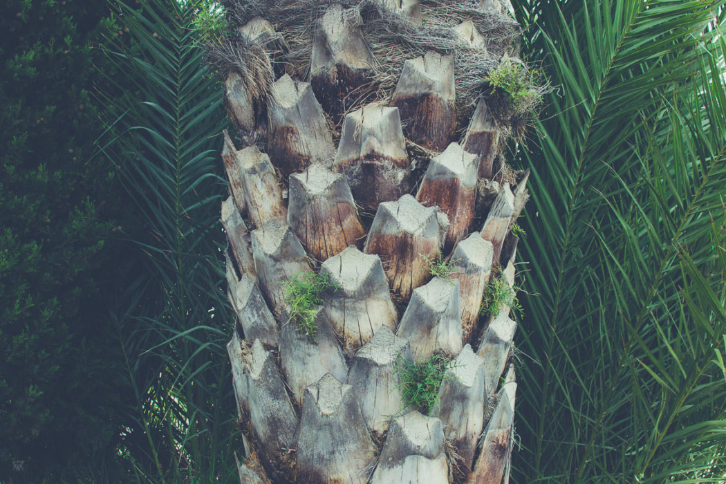 Photography of a palm tree in Andalusia Spain taken by Milie Del