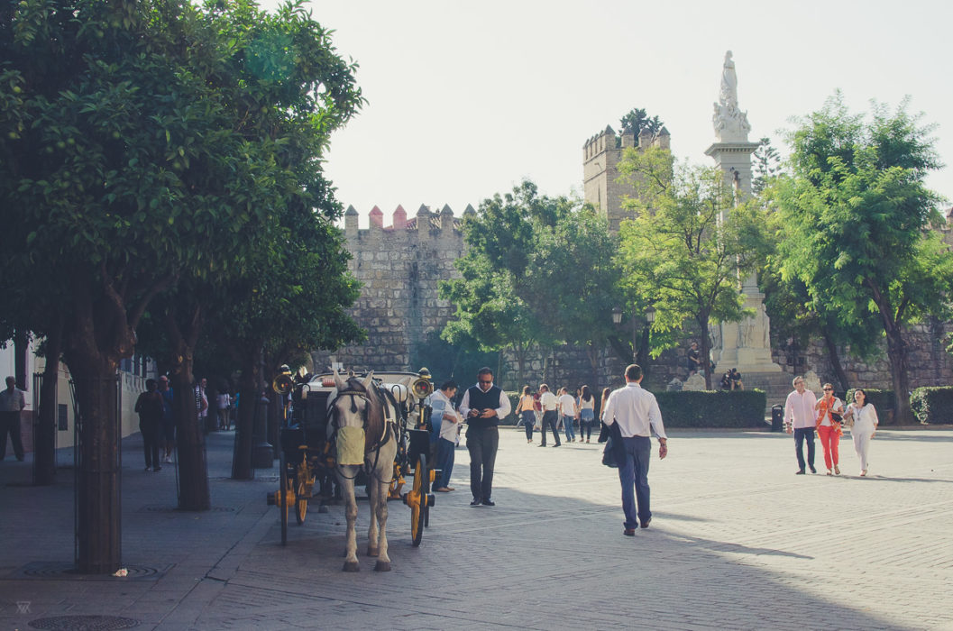 Horses outside of the Catedral de Sevilla Andalusia Spain taken by Milie Del