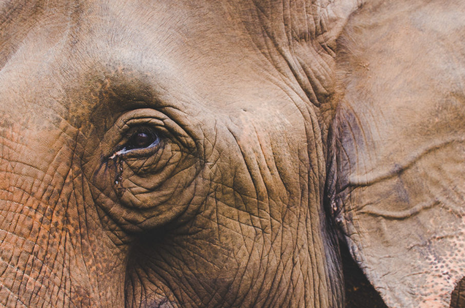 elephant eye and sadness