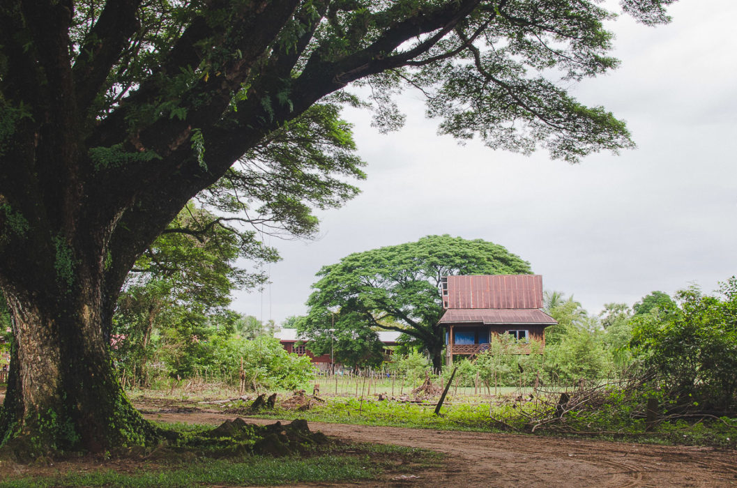 big tree and little house near champassak in Laos taken by Milie Del