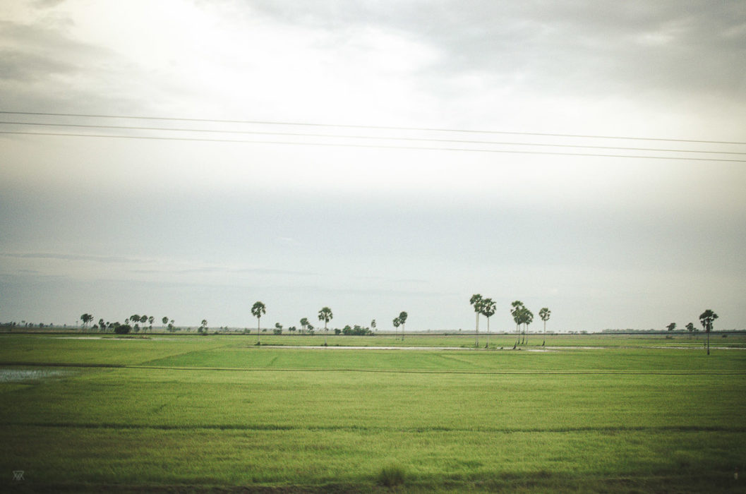 palm trees landscape in Cambodia taken by Milie Del