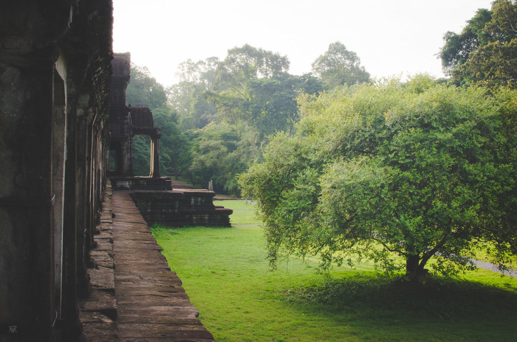 angkor vat at sunrise and green tree in Cambodia taken by Milie Del
