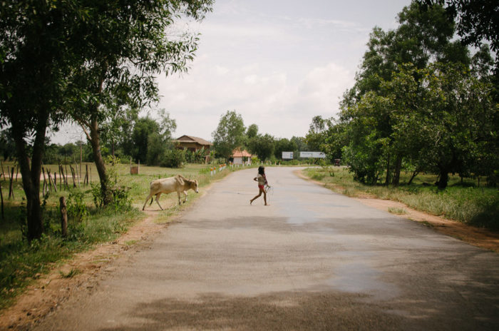 the girl and her cow crossing a road in Cambodia taken by Milie Del