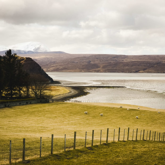 sheeps and Green fields in Kyle of Tongue, North of Scotland taken by Milie Del