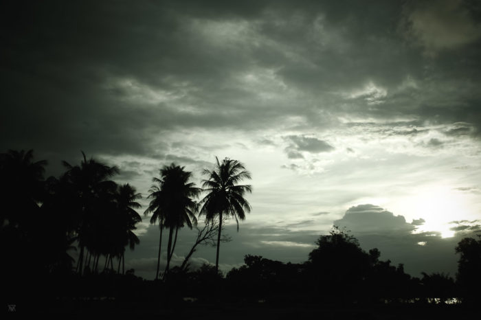 stormy sunset on palm trees on Don Det islandin Laos taken by Milie Del