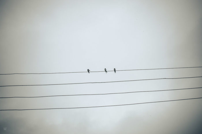 3 swallows in a salt factory under the rain near Vientiane Laos taken by Milie Del Salt of the earth