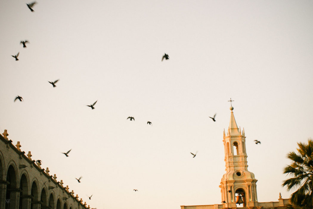 photo flying birds and of the Cathedral in old town arequipa Peru by Milie Del