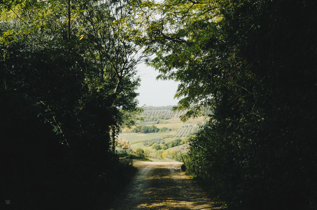 Little road in Tuscany, Italy, Taken by Milie Del
