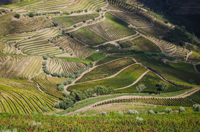 Amazing landscape over the vineyards in Douro Valley