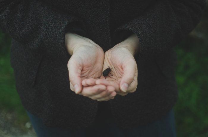 Hands handing a beetle bee - our wildest dreams