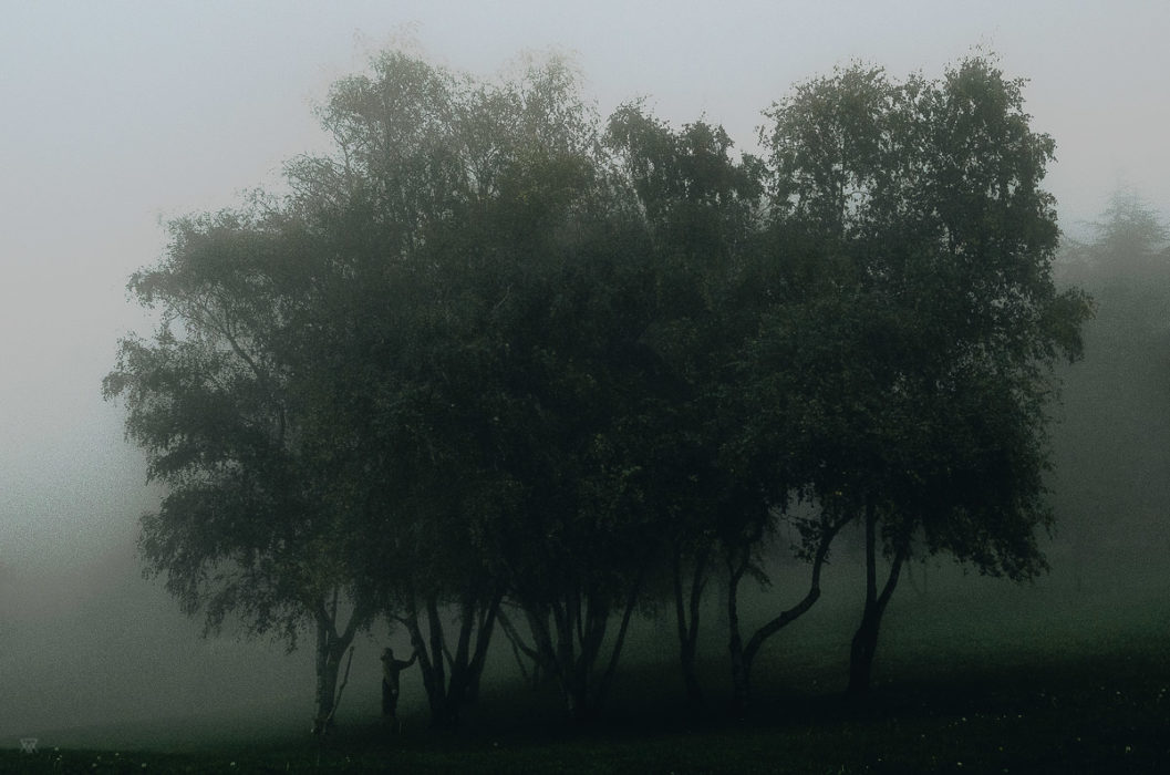 The edge of the wood, stranger mists, Milie Del, human and a tree in the fog in tuscany, italy