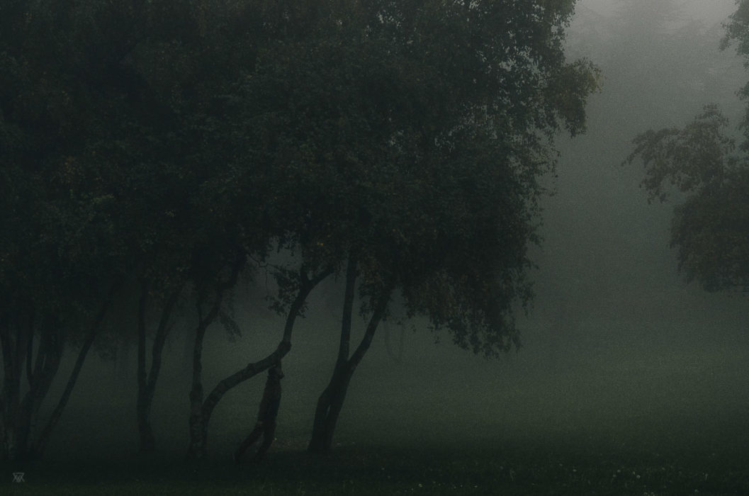 Becoming a tree, stranger mists, Milie Del, human and a tree in the fog in tuscany, italy