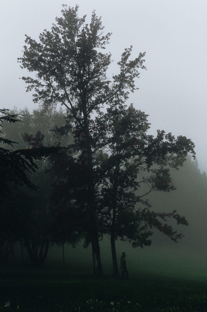 Back to wilderness, stranger mists, Milie Del, human and a tree in the fog in tuscany, italy