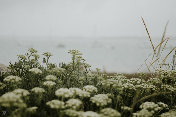 Wild flowers and sea Milie Del Photographer Saltwater Brittany France