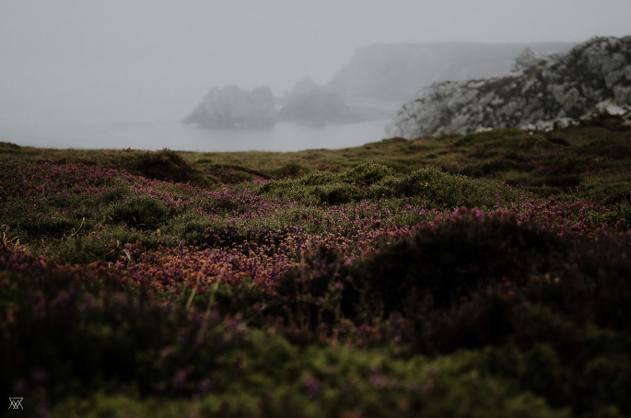 Landscape in Brittany, Heather, cliffs and sea Milie Del Photographer Saltwater Brittany France