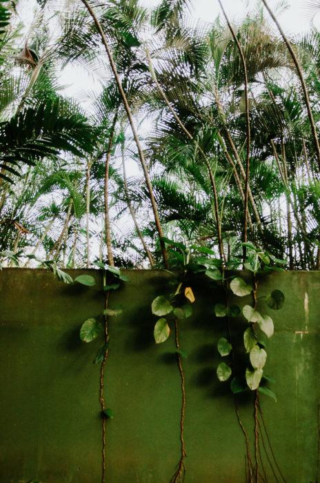 mur vert vegetations panama voyage photographe