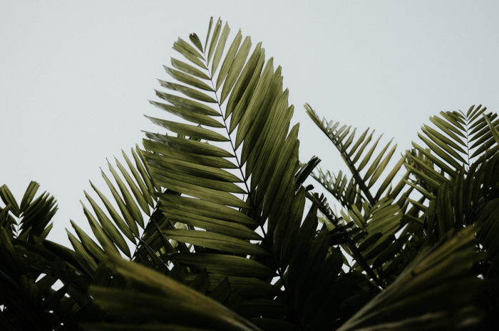 feuilles tropicales ciel panama city