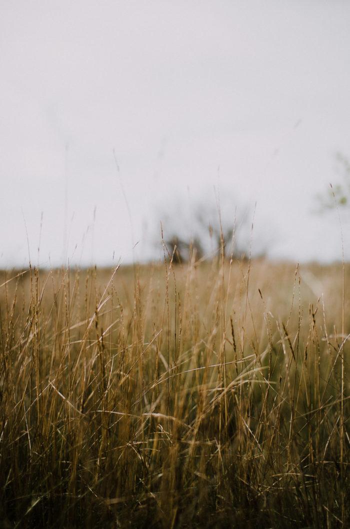 field of long grass at domaine de la palissade