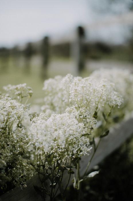 Fleurs des champs au printemps pres d'une barriere en camargue