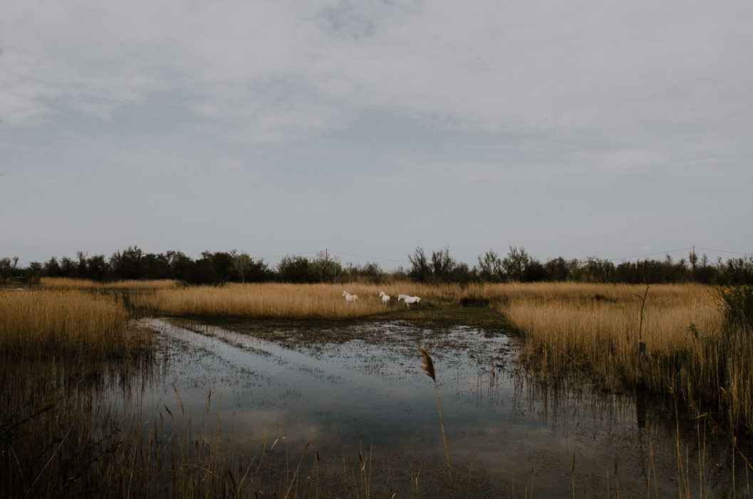Photograph of Camargue lanscape with wild horses