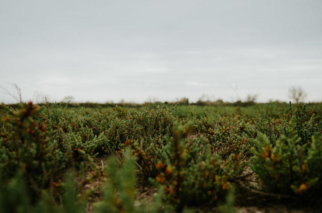 la sansouire en avril près des saintes maries de la mer photo par milie del
