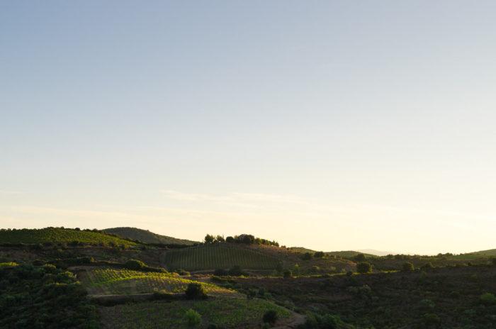 paysage vigne domaine La Lauzeta lumière dorée lever soleil milie del photographe