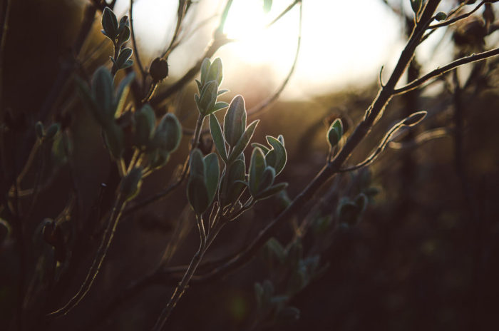 wild herbs at sunrise with golden light by milie del photographer