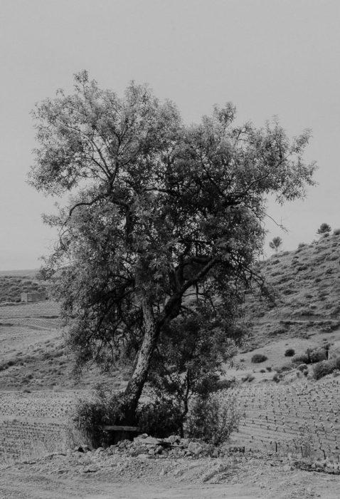 Black and white photography tree at domaine la lauzeta saint nazaire de ladarez by milie del