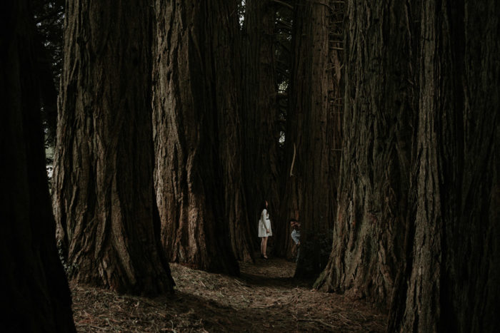 seance engagement sequoias poesie photographe artistique