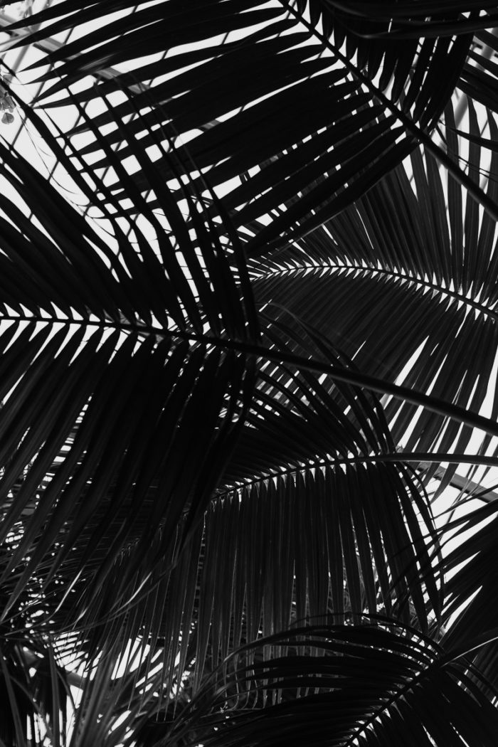barbican center tropical leaves greenhouse london