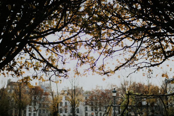 feuilles automne paris appartements haussmanniens