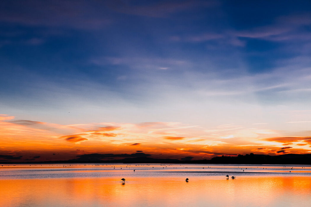 Winter sunset Wetlands Flamingos Montpellier Occitanie