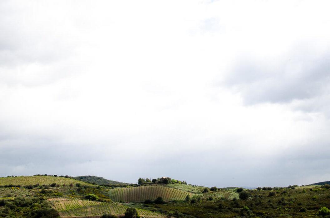 branding reportage vineyard la lauzeta Milie Del